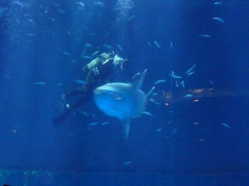 名古屋港水族館141012-03.JPG