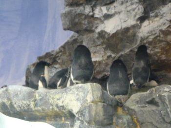 名古屋港水族館141012-05.JPG
