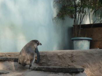 夢見ヶ崎動物公園150426-15.JPG