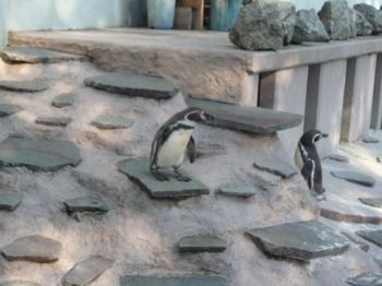夢見ヶ崎動物公園150426-18.JPG
